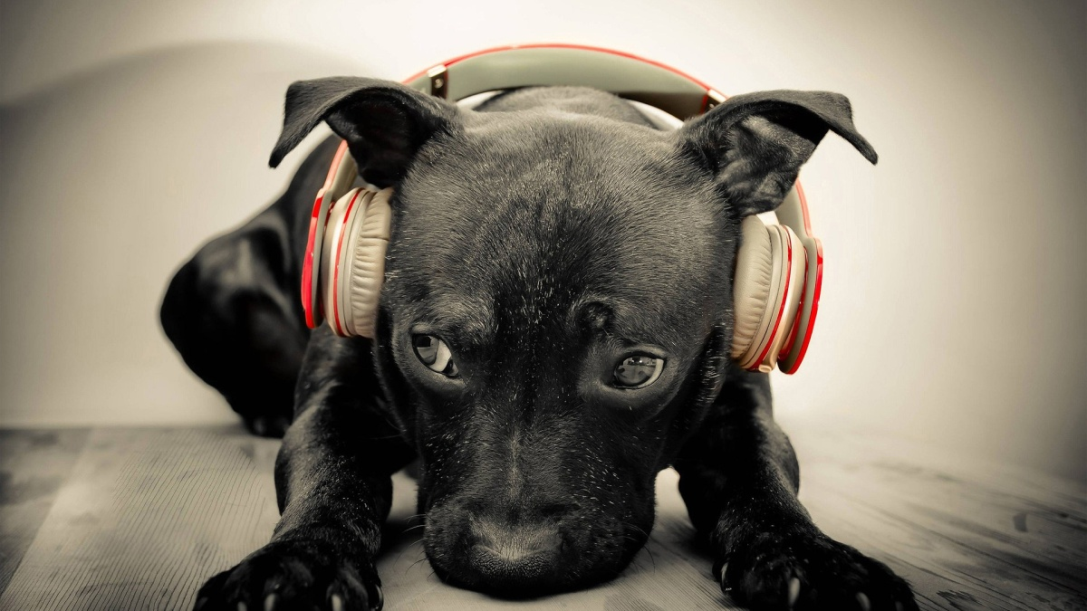 Can Dogs use Headphones?